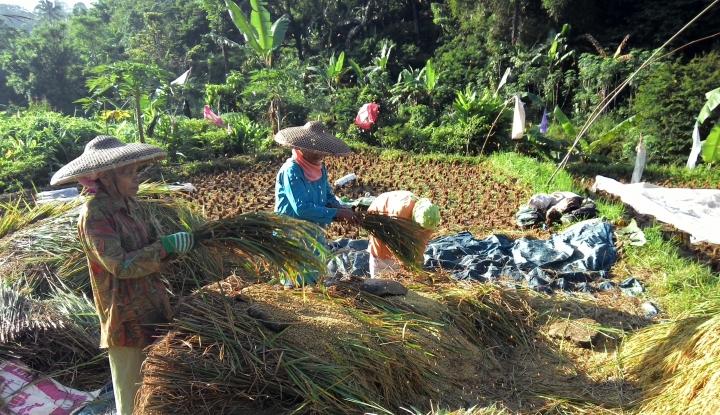 Foto Berita Bangka Belitung Didorong Kembangkan Sektor Pangan dan Pertanian