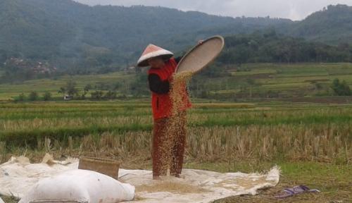 Foto Puluhan Hektare Lahan Pertanian di Gunung Kidul Kekeringan
