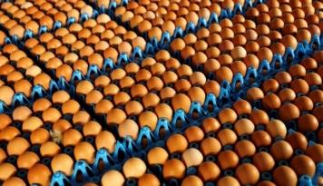 Foto Telur-Telur Tercemar Ditemukan di Polandia