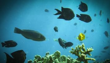 Foto Jaga Laut, Sushi Tei Indonesia Buat Program Ini
