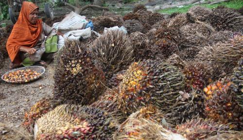 Foto KKP Manfaatkan Limbah Sawit untuk Pakan Ikan