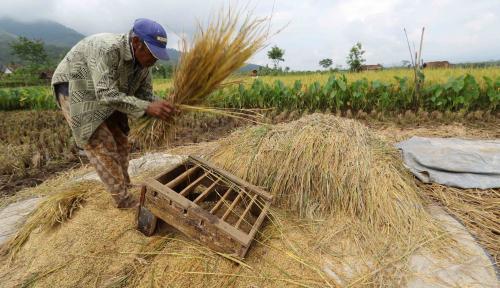 Foto Harga Pangan Terjangkau Bisa Cegah Peningkatan Malnutrisi Indonesia