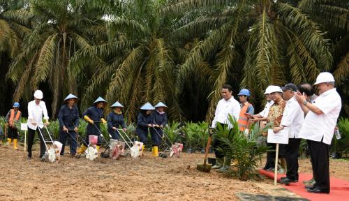 Foto Ingat! Izin Pemanfaatan Hutan Tak Digunakan Bakal Kita Tarik, Tegas Presiden