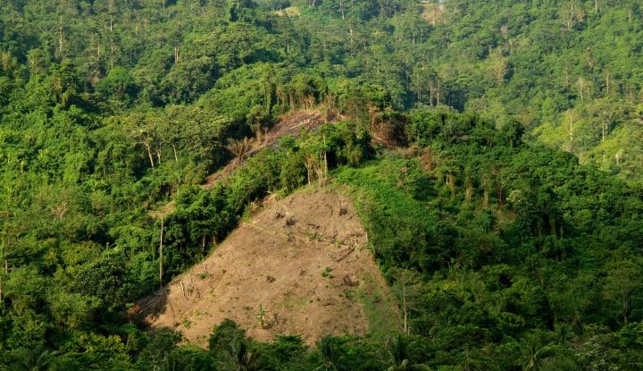 Miris, 1,7 Juta Keluarga di Kawasan Hutan Masih Miskin - Warta Ekonomi
