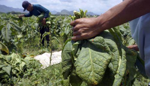 Pemerintah Diminta Segera Membuat Road Map Industri Hasil Tembakau