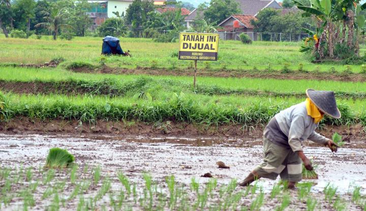 kementan harap operasi pasar tidak rugikan petani