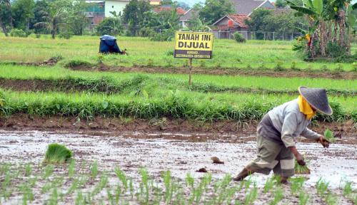 Foto Dinas Pertanian Salurkan Satu Ton Benih Padi pada Petani