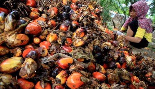 Foto Stok Melimpah, Harga Minyak Nabati Global Masih Terjerembab