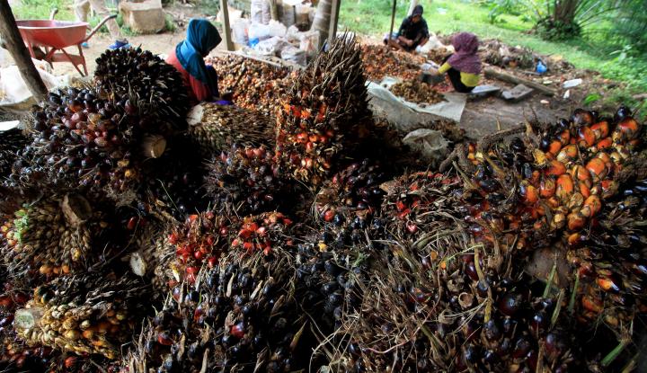 Foto Berita Indonesia Siap Hadapi Kebijakan UE tentang Sawit
