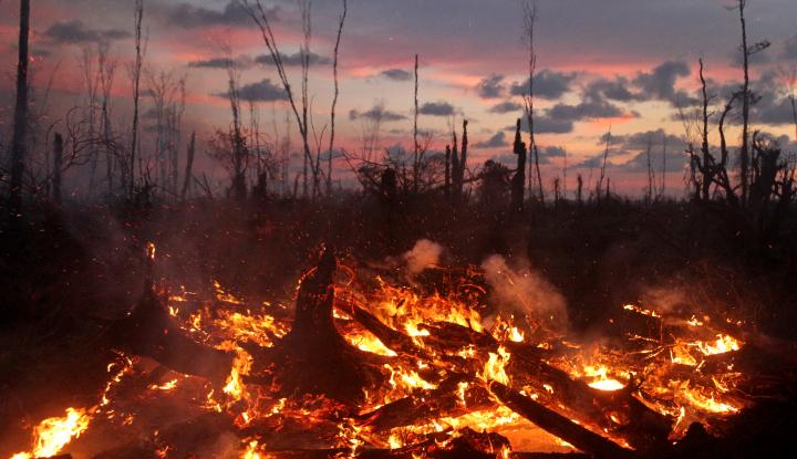 Foto Berita Bakar Sampah Sembarangan, Dua Hektare Hutan Sadai Terbakar