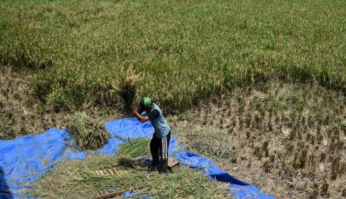 Foto Program Cetak Sawah 150 Hektare Ditunda Hingga 2019