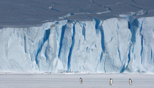 Foto Selandia Baru Pernah Dihuni Penguin Sebesar Manusia