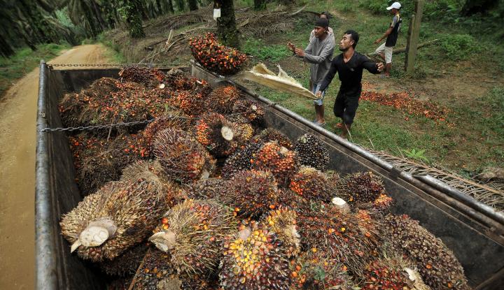 Foto Berita Masalah Keamanan Jalur Transportasi Buat Pengusaha Sawit Riau Tekor