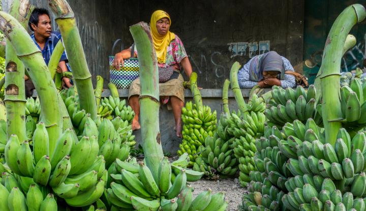 Foto Berita Ekspor Pisang Mas Petani Binaan PT Great Giant Pineapple Naik 4 Kali Lipat