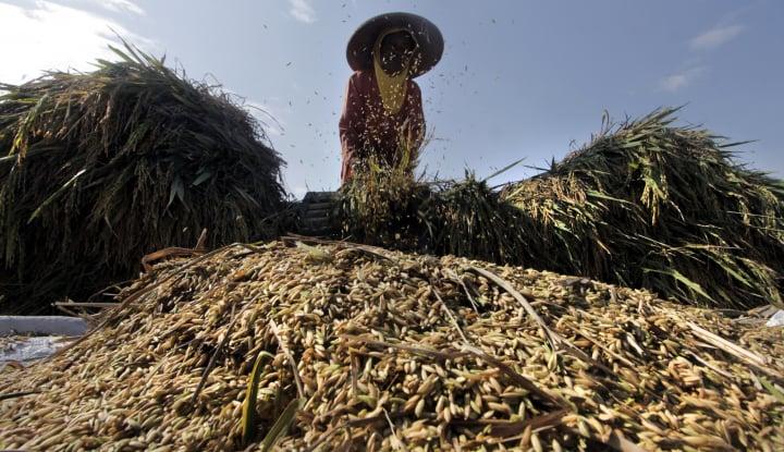gubernur sulsel: kalau mau beras, ambil saja di sini dulu