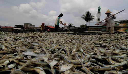 Foto Nilai Ekspor Ikan Olahan di Bali Meningkat Setiap Bulannya