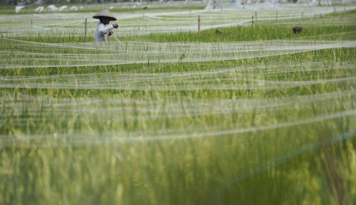 Foto Yogyakarta Akan Tingkatkan Penerapan Mekanisasi Pertanian