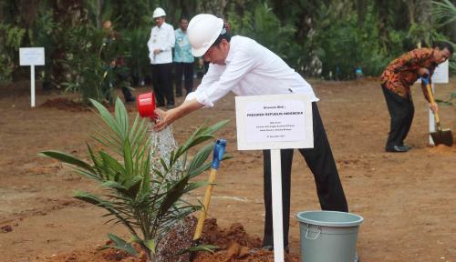 Foto Jokowi Luncukan Peremajaan Sawit Rakyat di Riau