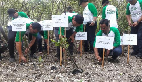 Foto Sambut HUT ke-40, BPJS Ketenagakerjaan Sumbagut Tanam 4.000 Bibit Mangrove