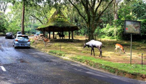 Foto KAI Beri Potongan Harga Masuk Taman Safari, Asal....