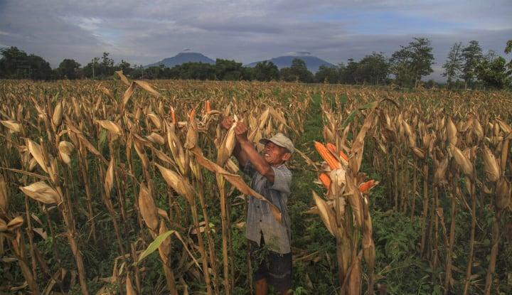 mentan: pendapatan petani di gorontalo tembus rp8 triliun