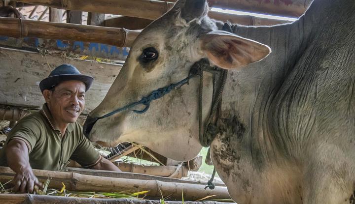 Foto Berita Daging Korban Istiqlal untuk Siapa Saja?