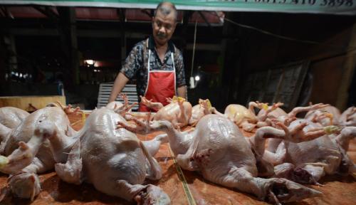 Foto Stok Menipis, Harga Daging Ayam Meroket