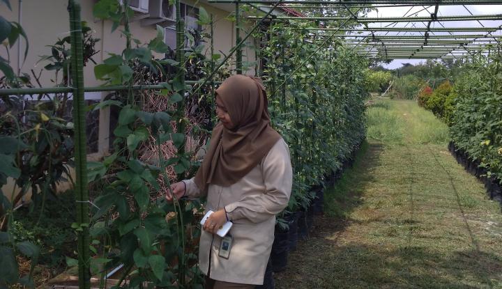 Foto Berita Produk Agribisnis Pusri Sumbang Pendapatan Rp1 Miliar