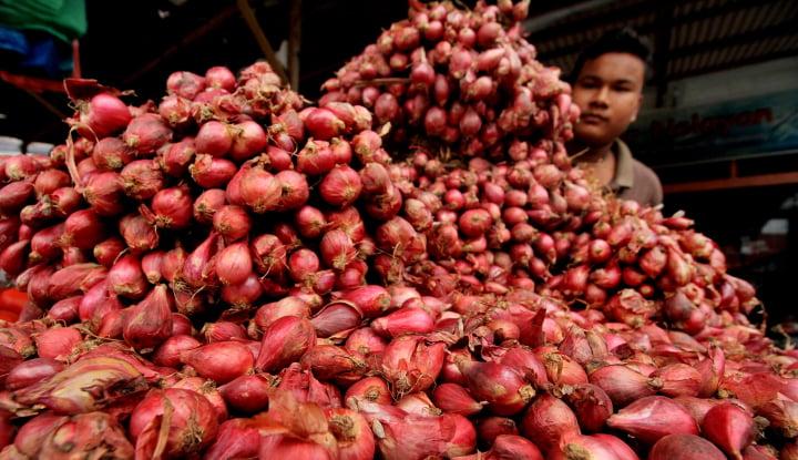 Foto Berita Hasil Produksi Bawang Merah Bangka Tengah Tembus 12,5 Ton/Ha