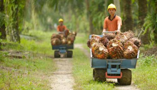 Foto Top! Meski Untung Turun Astra Agro Tetap Bagi Rezeki ke Pemegang Saham