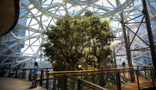 Foto Spheres, Kantor yang Berisikan Hutan Hujan Milik Amazon