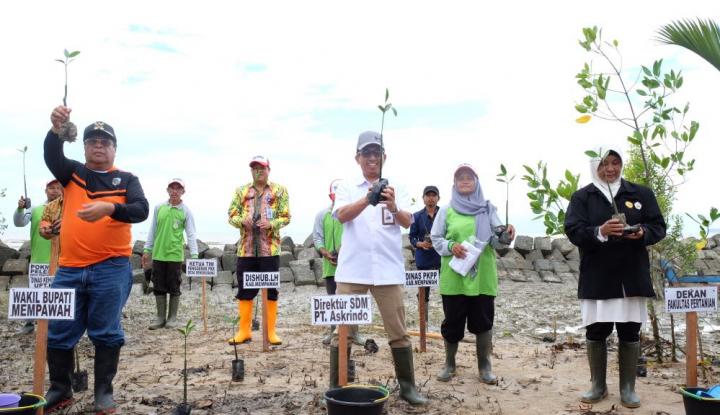 Foto Berita BUMN Hadir untuk Negeri, Askrindo Tanam Mangrove di Menpawah