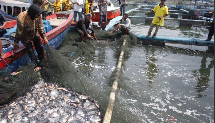 Foto Berita Padang Panjang Target Produksi Ikan 768 Ton Setahun