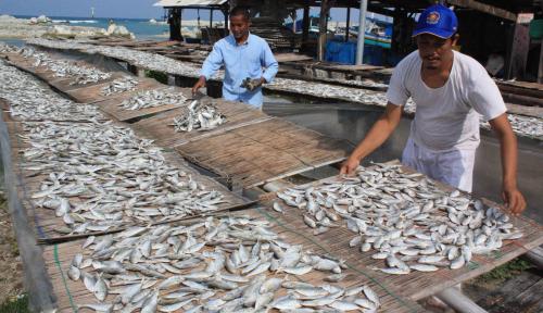 Foto Pelindo IV Dorong Akselerasi Ekspor Ikan dari Tual