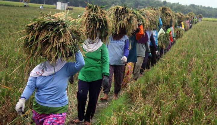 Foto Berita TFLL Bakal Beri Kredit Murah ke 17.500 Petani Kecil