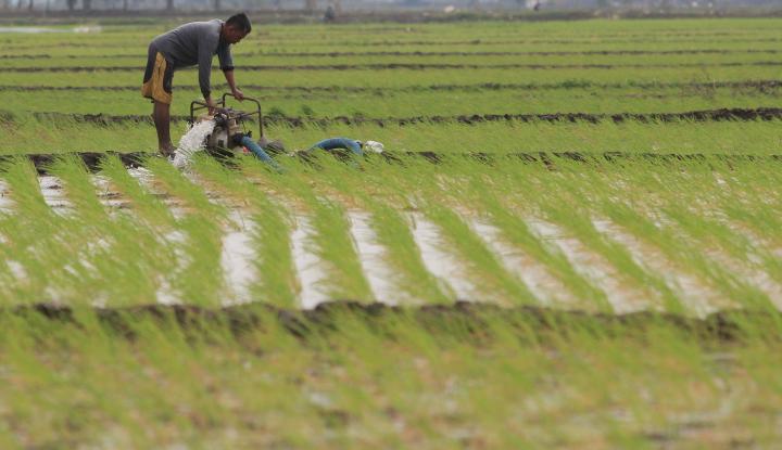 Foto Berita Kementerian PUPR Targetkan Bangun 1 Juta Hektar Irigasi