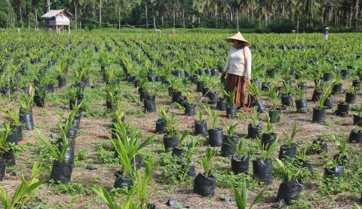 Foto DPR: Kebijakan Sawit Eropa Jangan Rugikan Indonesia