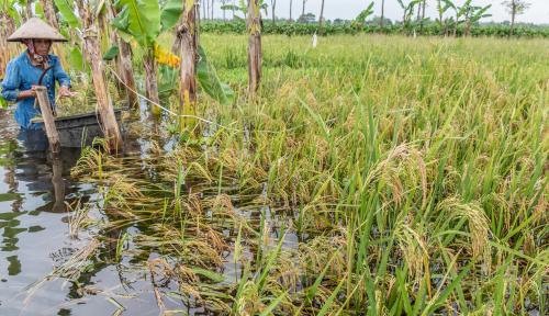 Foto 40 Hektare Sawah di Bima Rusak Akibat Banjir