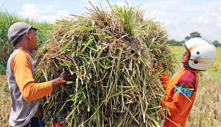 Foto Berita DPRD Riau Sayangkan Keputusan Bulog Beli Gabah pada Tengkulak