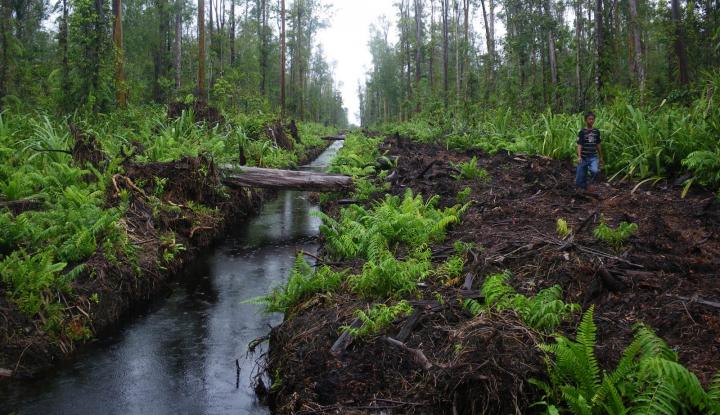 Awas! Penggundulan Hutan Picu Munculnya 6 Epidemi Baru