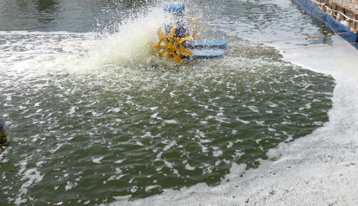 Foto Berita Memang, Izin Kapal Ikan Asing Harus Distop!
