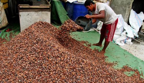 Foto Kementerian Pertanian Dukung Program Kejayaan Kakao di Sulsel