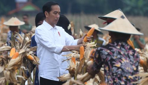 Foto Presiden Bagikan SK Perhutanan Sosial di Ladang Jagung