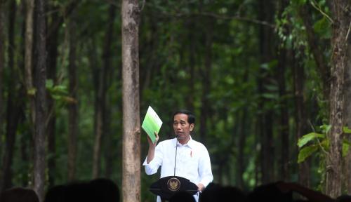 Foto 2018, Pemerintah Bidik 7 Juta Sertifikat untuk Petani Sawit