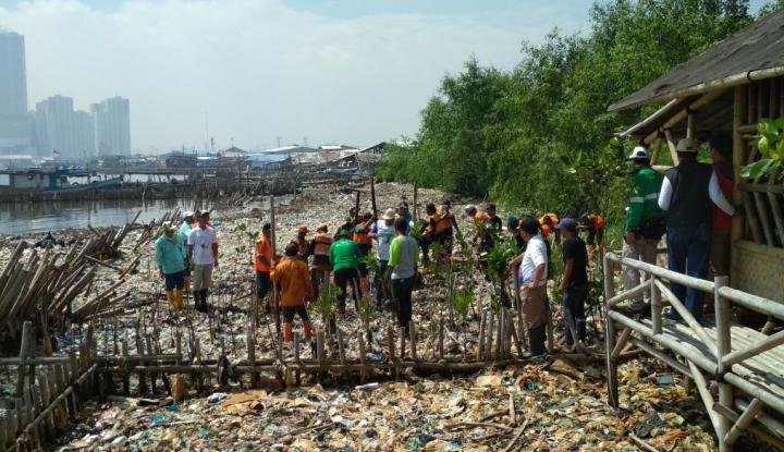 Foto Berita Sejarah Terbentuknya Ecomarine Mangrove di atas Lautan Sampah