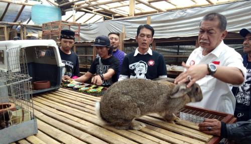 Foto Deddy Mizwar Bakal Kembangkan Potensi Ekspor Kelinci Jabar