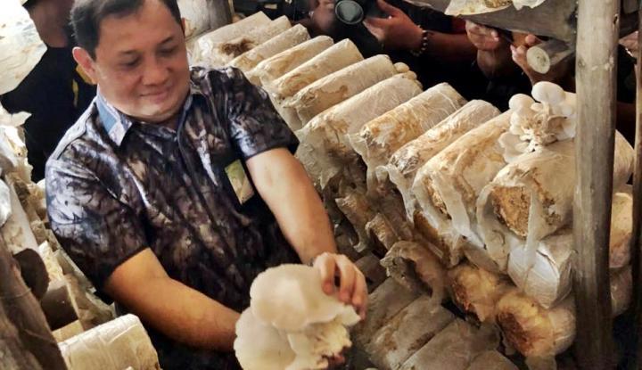 Foto Berita Mitra Binaan Pertamina MOR II Kembangkan Jamur Pedado