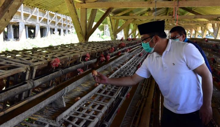 Foto Berita Ridwan Kamil: Potensi Pasar Ayam Petelur Masih Tinggi