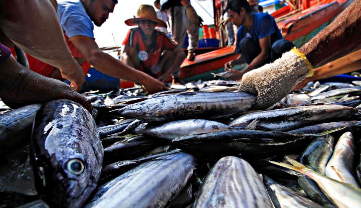 Foto Berita Keterbatasan Armada Jadi Pemicu Minimnya Produksi Ikan Nelayan Bengkulu