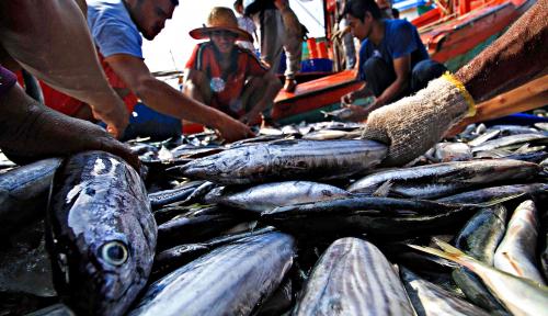 Foto Pascagempa, Nelayan Sulteng Belum Berani Melaut